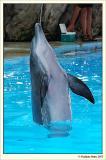 Dolphin power!