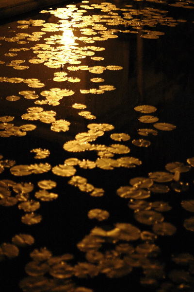Moon Over The Golden Lilypads