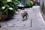Alley cat: Bangkok