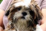 Village puppy: Ban Dom Kirek