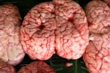 Cow brains for sale: San Kamphaeng Market