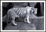 Fort Worth Zoo - 2005