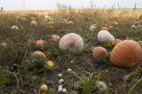 Pumpkins and eggs