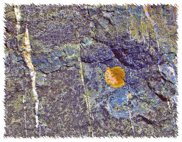 Rock-006 .jpg