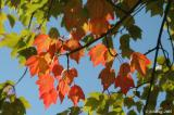 More leaves of fall
