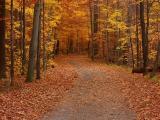 Légendes d'automne