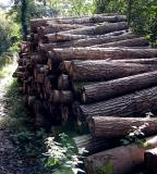 Logs I