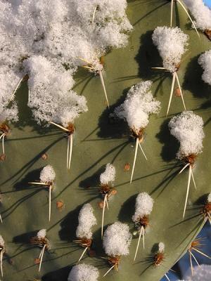 02-12 Snow 150.jpg
