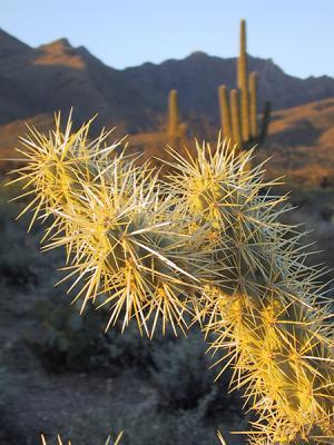 00-03 Cactus 668.jpg