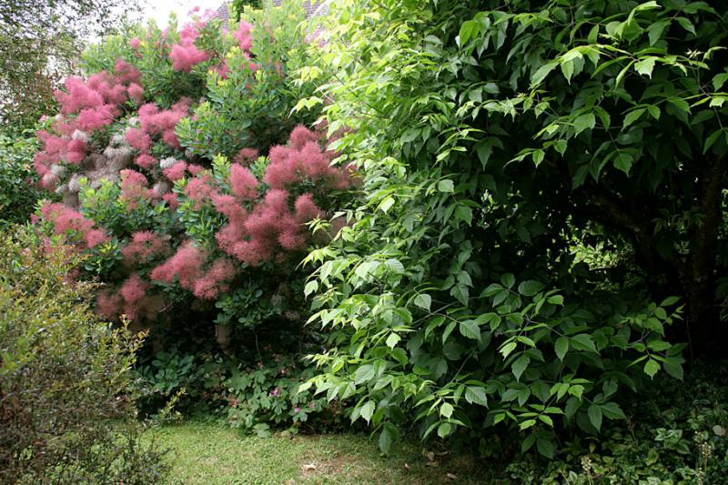 Allée entre arbustes