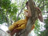 PICT5004 tinka laying on a tree limb.JPG