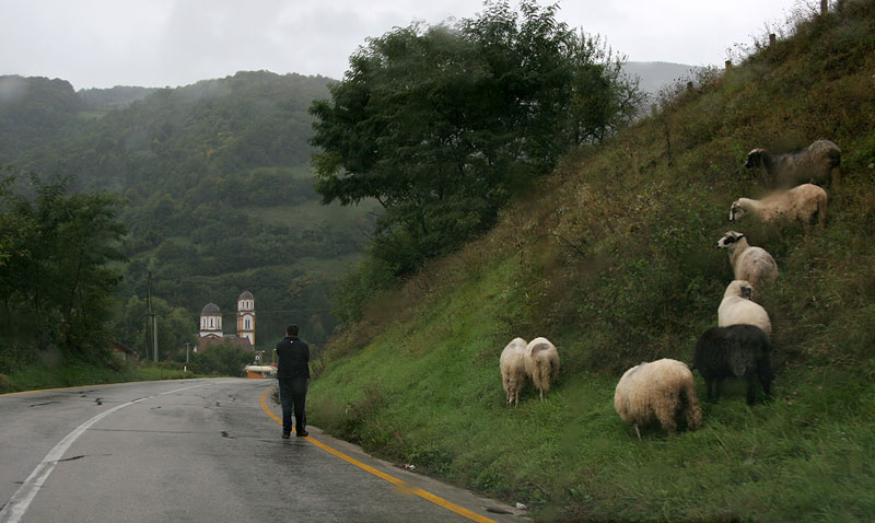 near Jajce,attention sheep!,Bosnia
