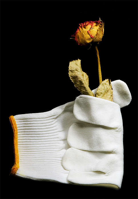 The Glove and the Dry Rose