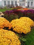 Botanical Front Yard