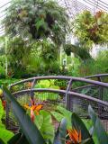 Botanical Jurasic Park