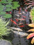 Botanical Pond