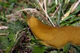 Slug-Bug!