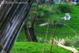 tigre-6.jpg