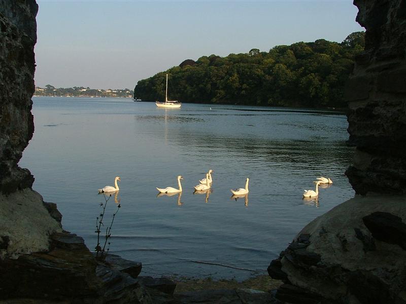 Devoran - Carnon River, 10 Jul 05