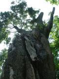 Fungi and Trees