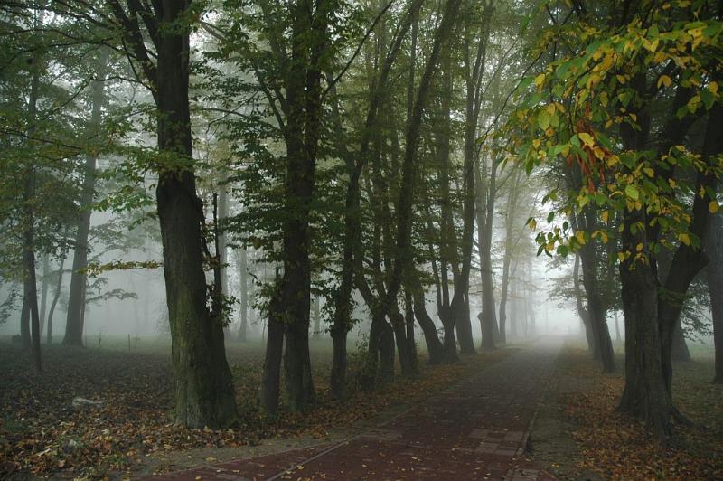 HORYNIEC MORNING   -fog