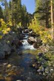 Rocky Creek and Aspens