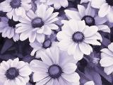 flower_origK.jpg