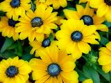 flowerk.jpg