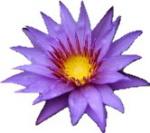 Lily_Flower2.jpg