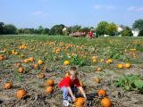 PumpkinPatch_05.jpg