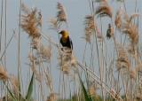 Spring 2005 Warbler Cavort