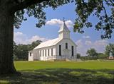 Pin Oak ,Texas