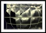 Abstract-0025.JPG