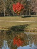 fall color 2005 #4