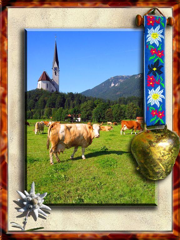 Classic Alpine Cows in Bayrischzell, Bayern