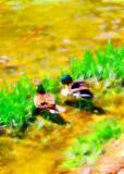 Ducks in Beer Creek... As Bernd Insisted !