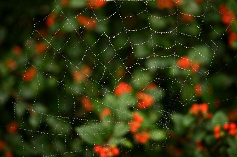 знакомства паутина