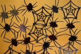 10 October - Magnetic spiders