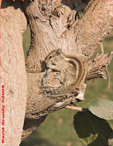 20050219 008 Sikandra - squirrel hhe.jpg