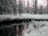 Mitkof Island Stream-2