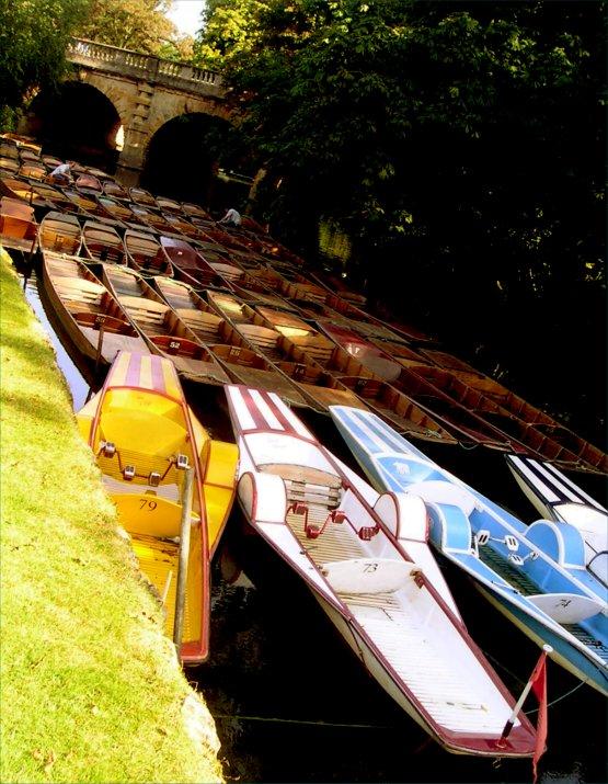 Botanic boat rentals
