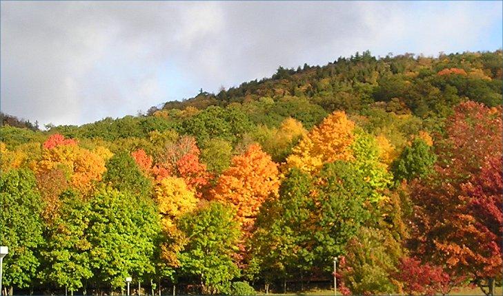 Fall array