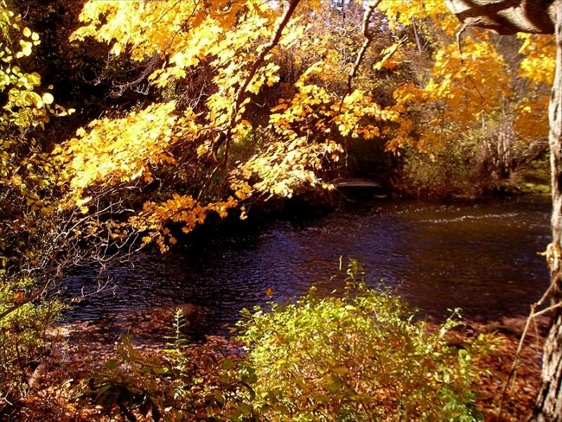 Backlit leaves and gentle stream