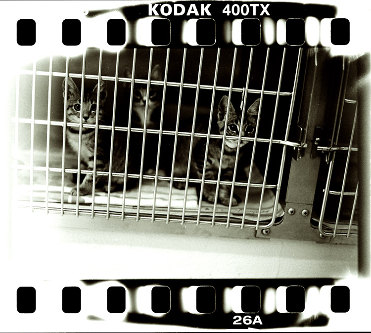 Animal Shelter 2