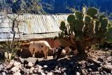 Copper Canyon, Mexico - 101.jpg