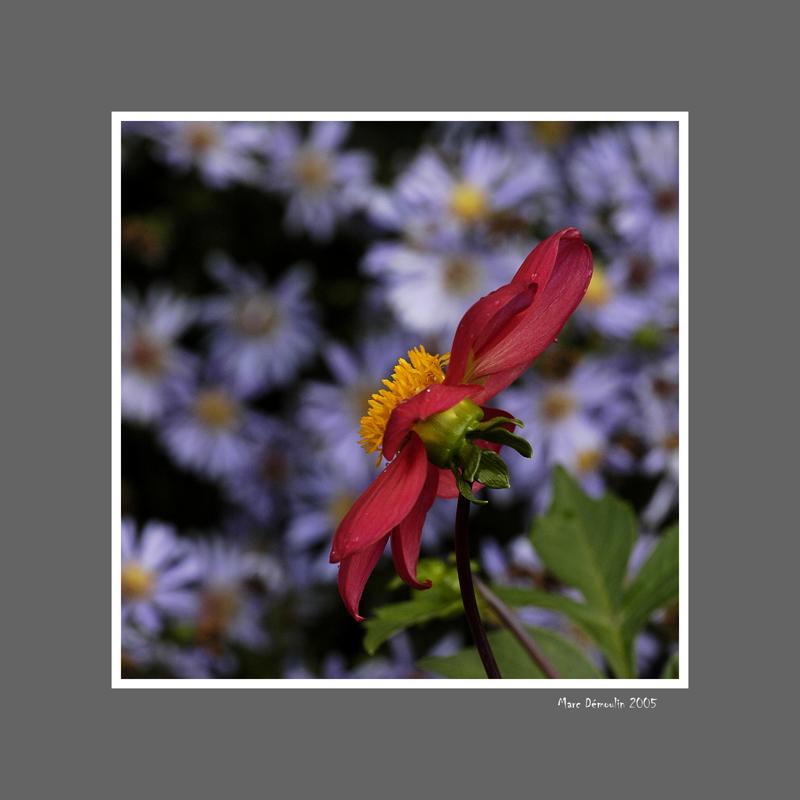 Floral 40