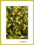 Yellow Autumn beginnings, Vincennes