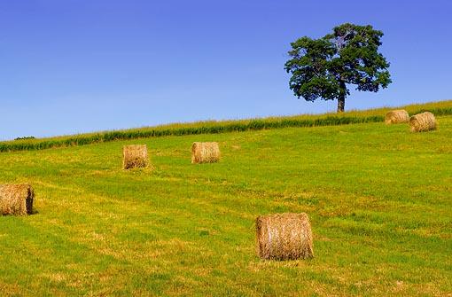 Hay Bales & Tree