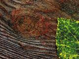 Leaf on Wet Wood 20050831