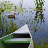 Duck Near Canoe 20050914